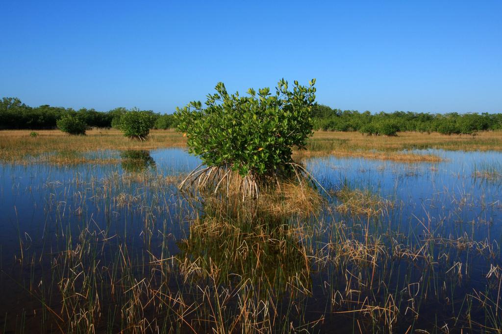ten thousand islands national wildlife refuge, florida