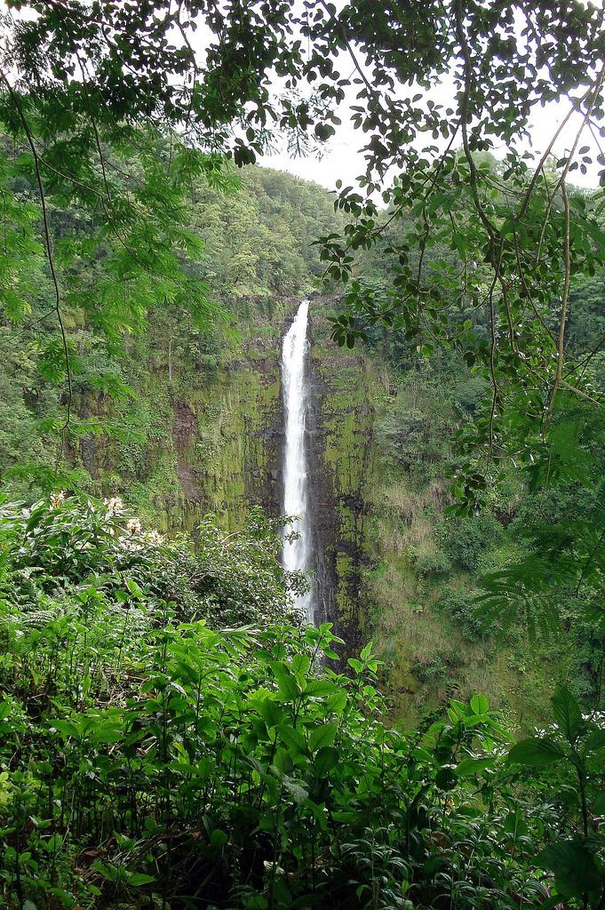 Akaka Falls, Akaka Falls Staet Park, Hawaii, Waterfall
