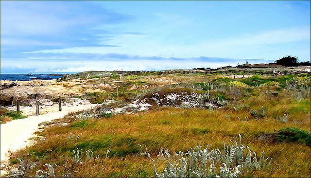 Asilomar State beach, California, Coast