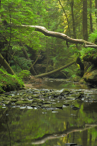 bankhead national forest, forest, alabama
