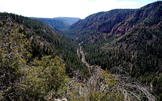coconino national forest, arizona