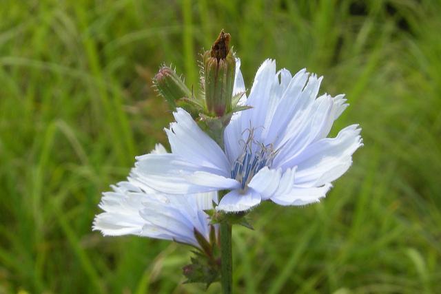 Blackhawk Springs Forest Preserve, Winnebago County, flowers