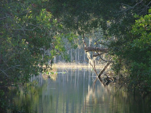 canal, ocala national forest, florida, lake beakman, lake sellers