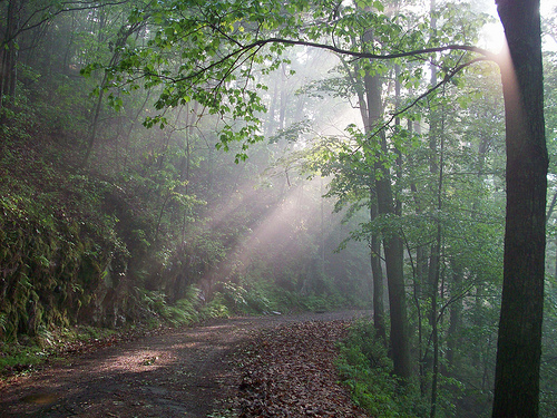 cherokee national forest, tennessee, sunlight