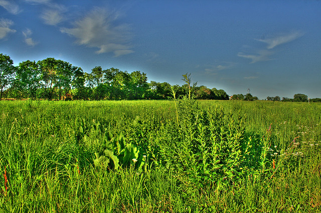 Deer Run Forest Preserve, Winnebago County Illinois