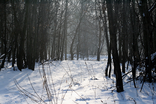 Deer Run Forest Preserve, winnebago county illinois, winter
