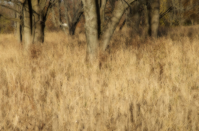 Eagle Creek Park, Indianapolis, Indianapolis, Indiana,