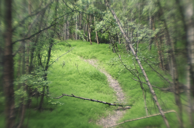 earthquake park, anchorage, anchorage alaska, woods, trail