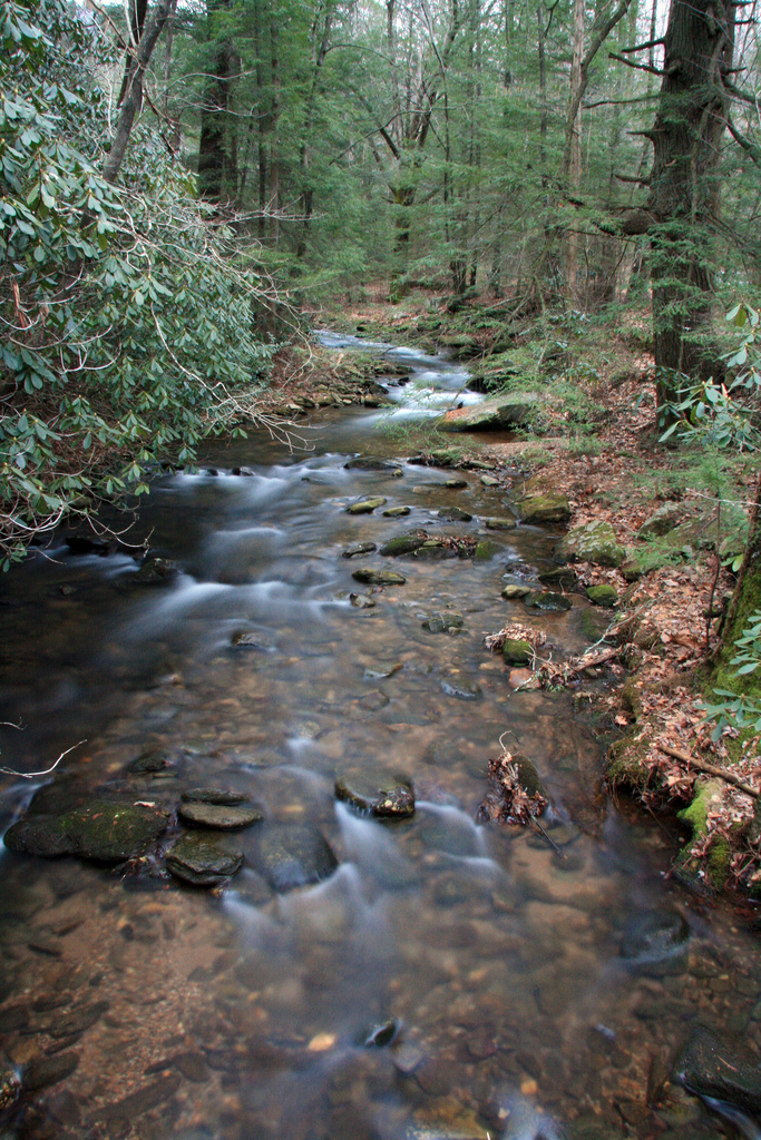 frogtown creek, chattahoochee national forest, forest, georgia