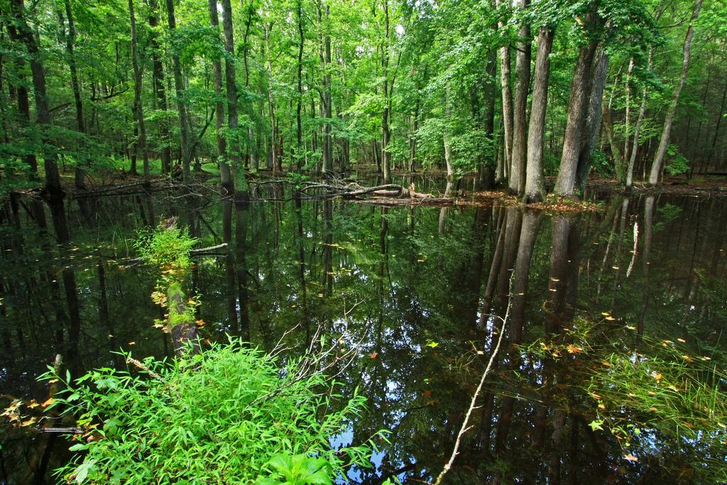 gum swamp, great smoky mountains national park, swamp