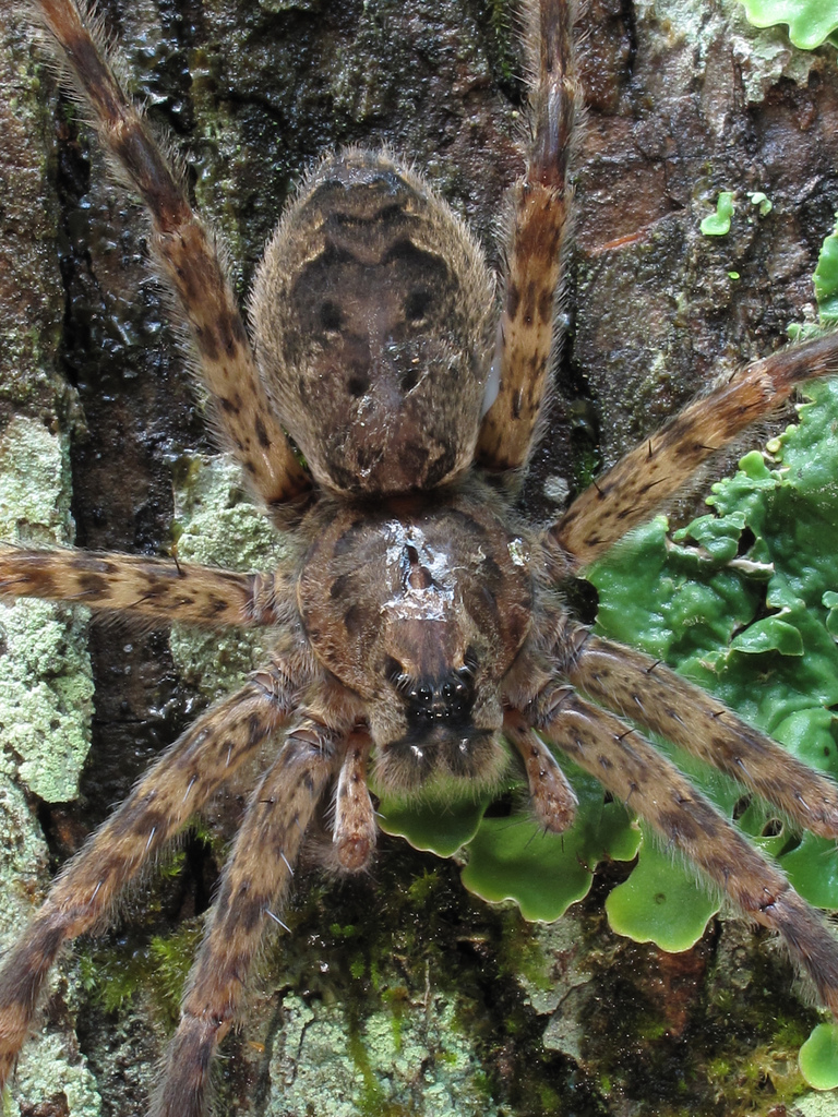 gum swamp, spider, great smoky mountains national park