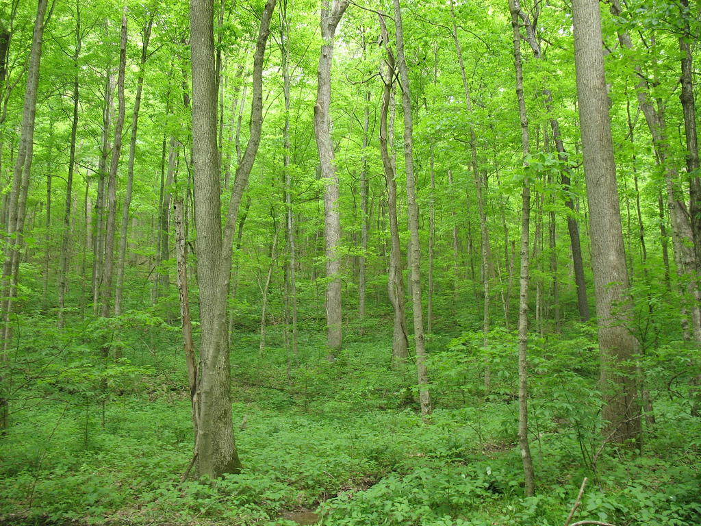 hoosier national forest, forest, indiana