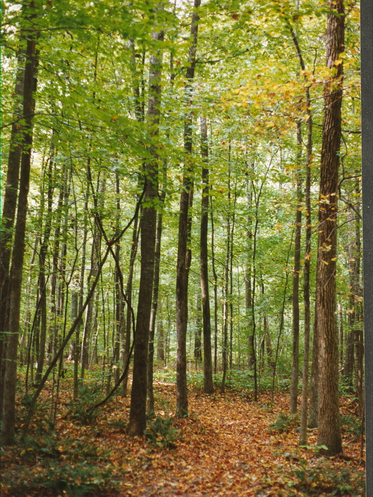 hoosier national forest, indiana, forest