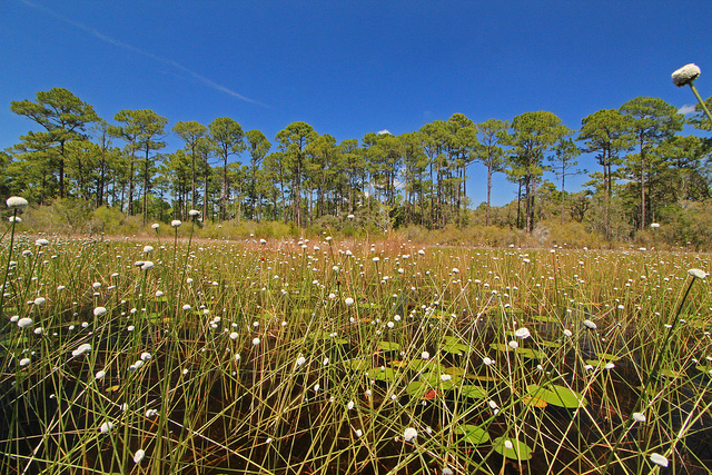 st. mark's national wildlife refuge, florida