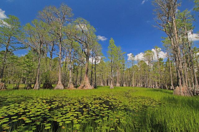 st. mark's national wildlife refuge, florida, pond