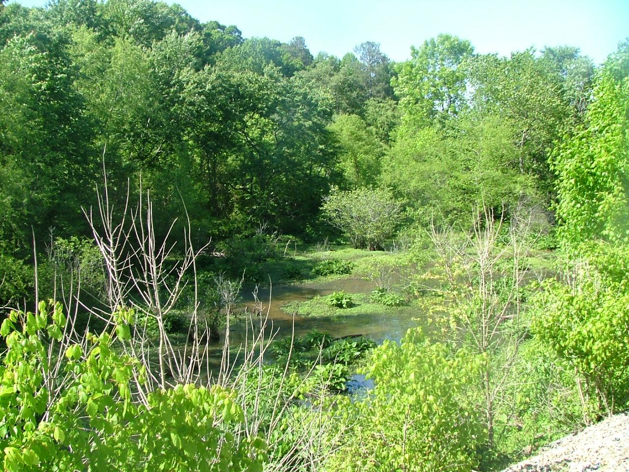 swamp, Mason Mill Park