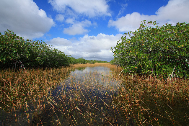Nine Mile Pond Canoe Trail, Everglades National Park
