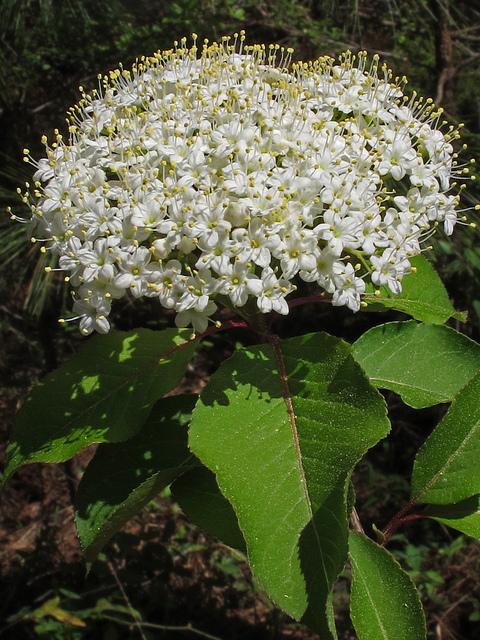 forest, oaky woods, oaky woods wildlife management area, flowers, georgia