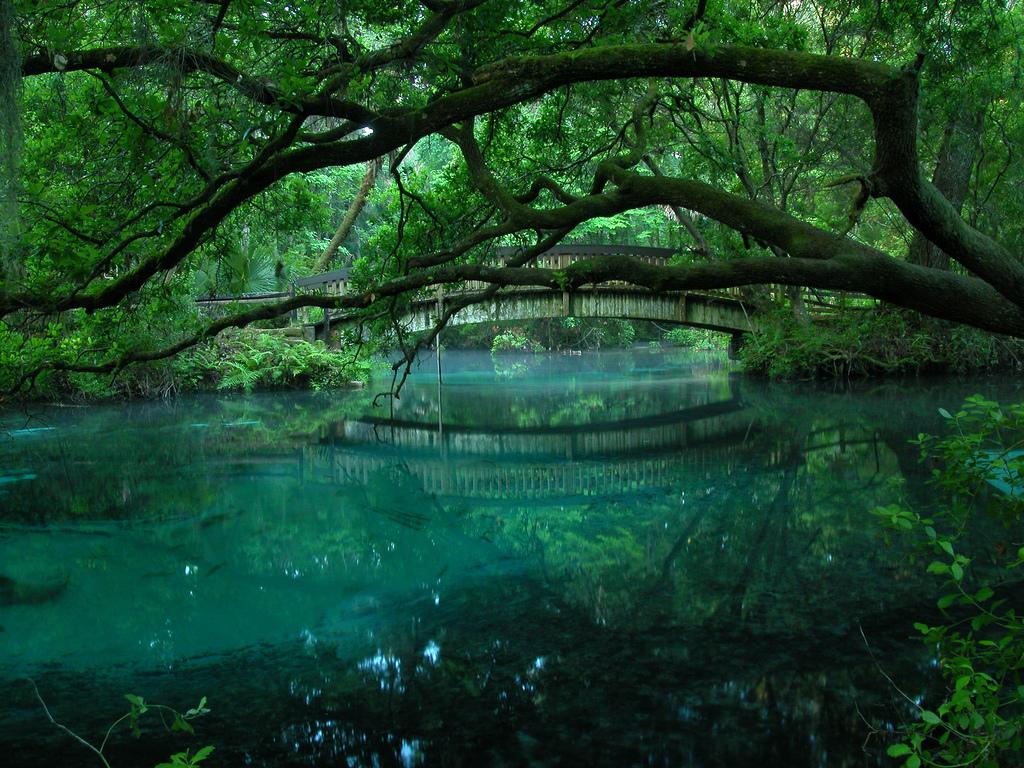 ocala national forest, springs, florida