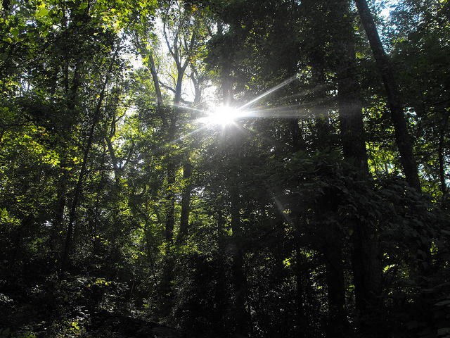 sunlight, peavine creek, fox 5 atlanta, trail
