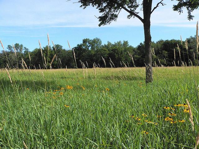 Pecatonica River Forest Preserve, Winnebago County Illinois