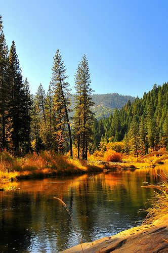 plumas national forest, california, forest, lake