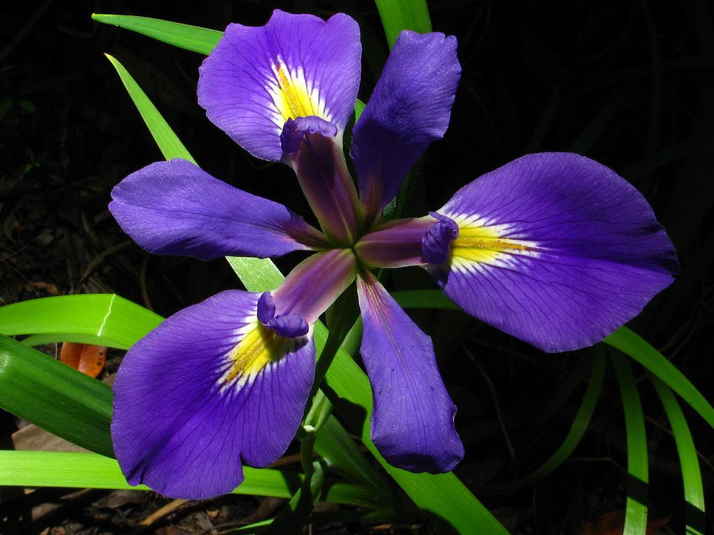 st. mark's national wildlife refuge, florida, swamp, flower