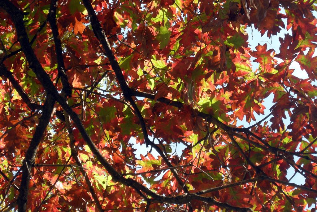 autumn, leaves, rock cut state park, illinois