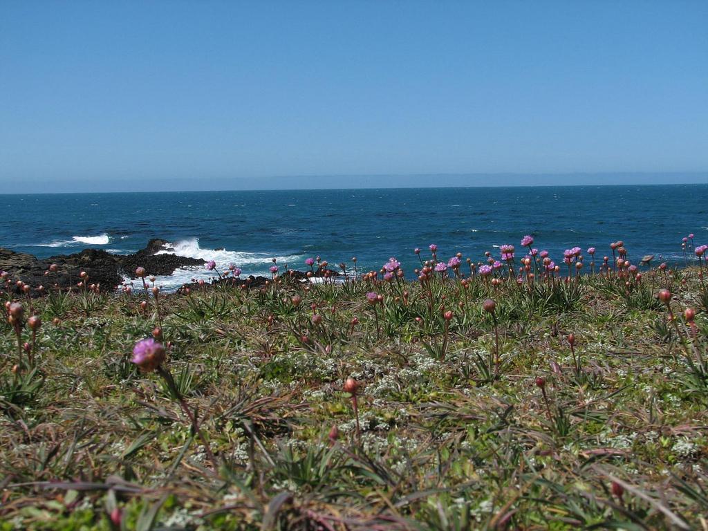 salt point state park, california, california coast, pacific ocean