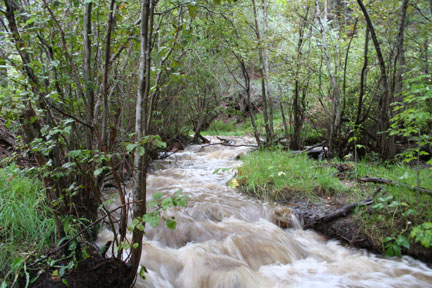 santa fe national forest, new mexico, river