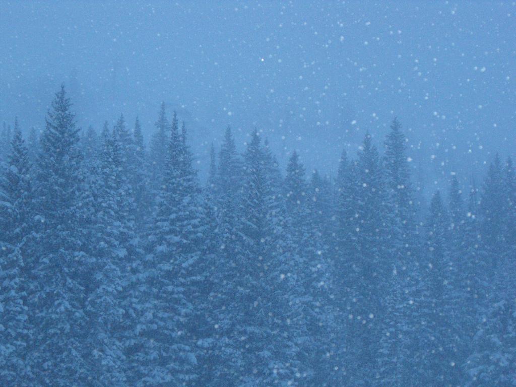 brighton utah, wasatch national forest, snow, snowing, utah