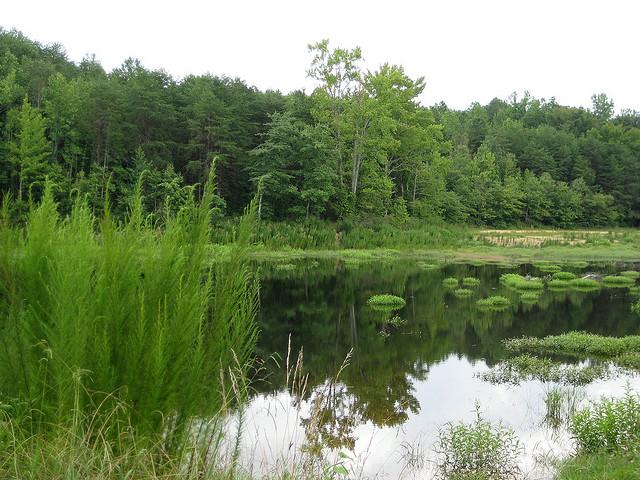 crowders mountain state park, north carolina, pond