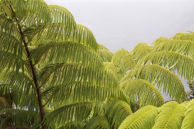 volcanoes national park, hawaii, ferns
