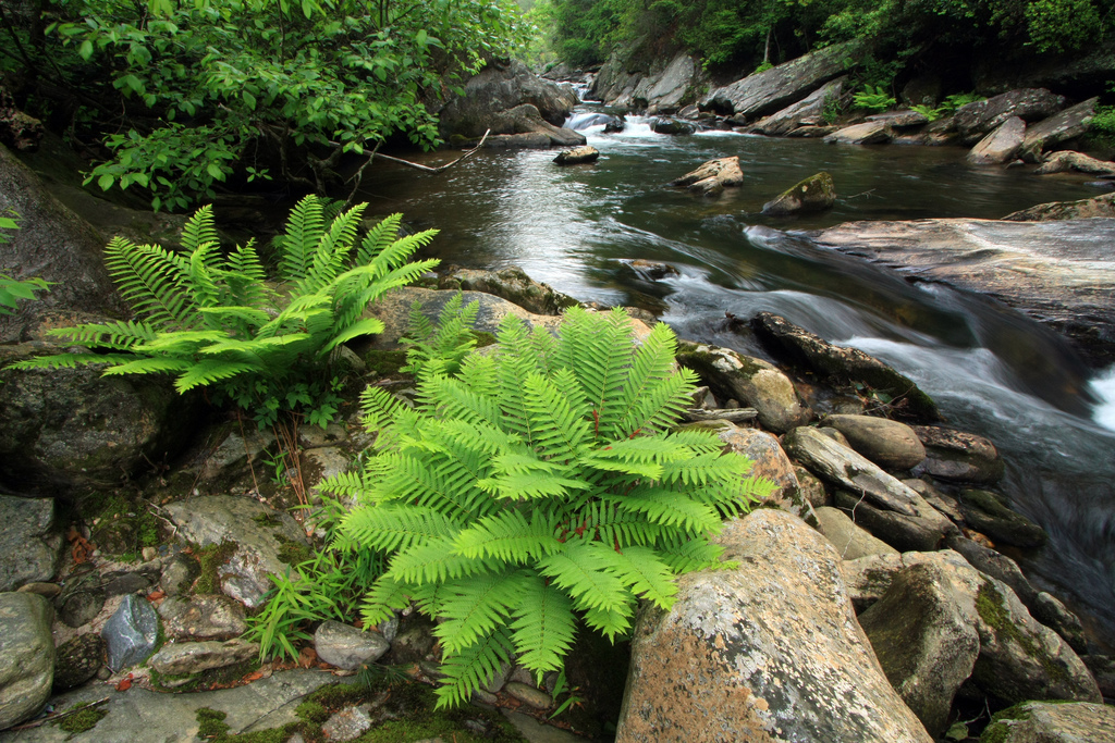 west fork chattooga river, chattahoochee national forest, river