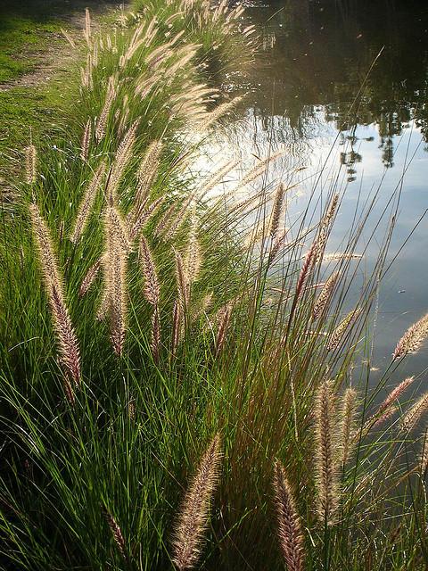 yorba regional park, anaheim california