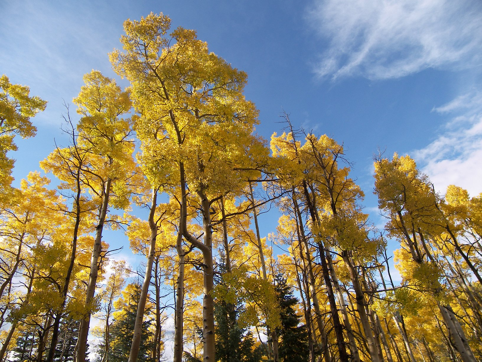 santa fe national forest, new mexico, rocky mountains, forest