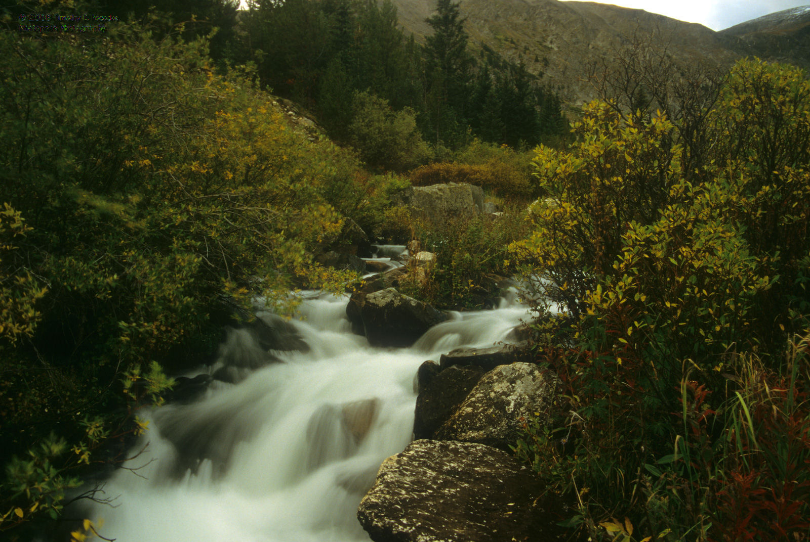 McCullough Gulch, Colorado, Stream, Arapaho National Forest