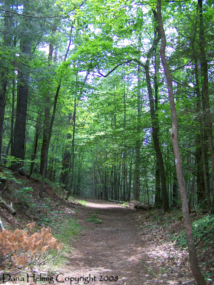 great smoky mountains national park, forest, trail