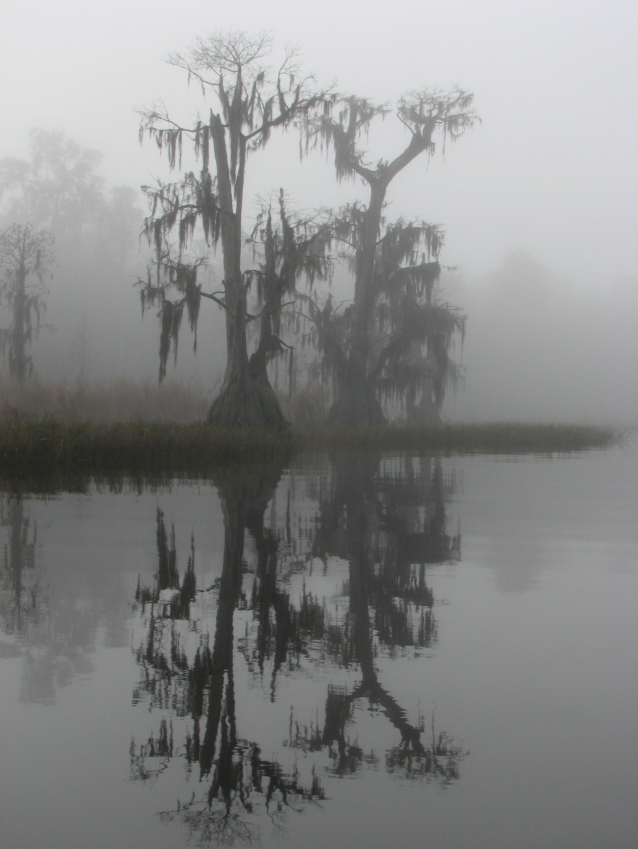osceola national forest, florida, fog, swamp, wetland