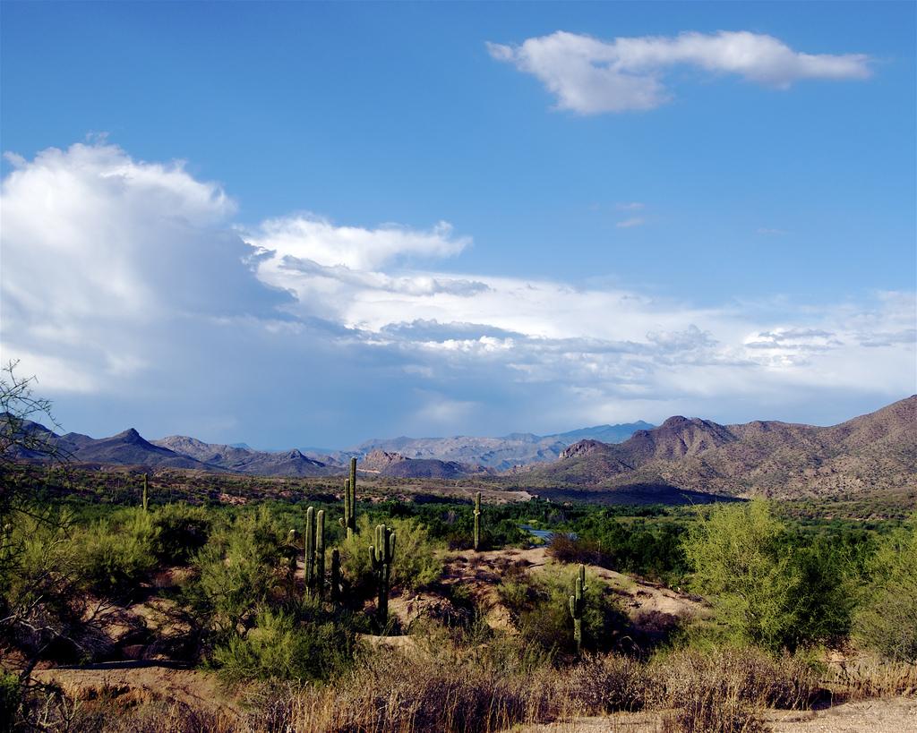 Tonto National Forest, Arizona, Desert